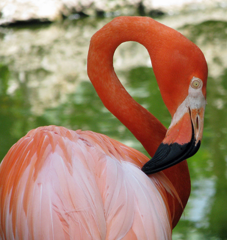 Flamingo Gardens - My Old Florida